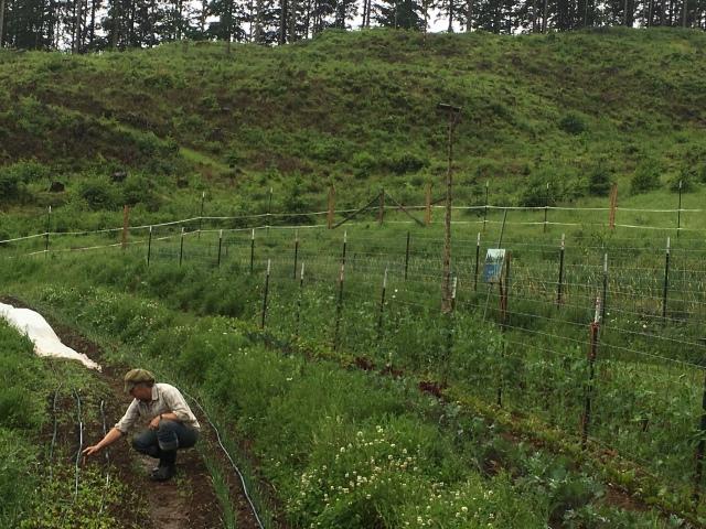 weeding carrots.JPG