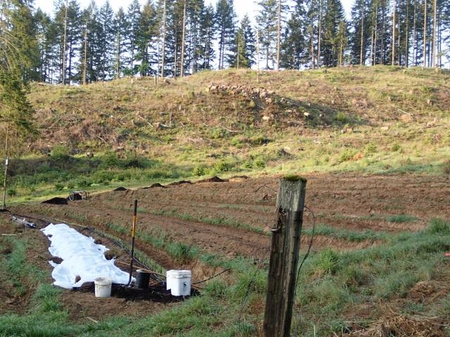 We need elk fence!
