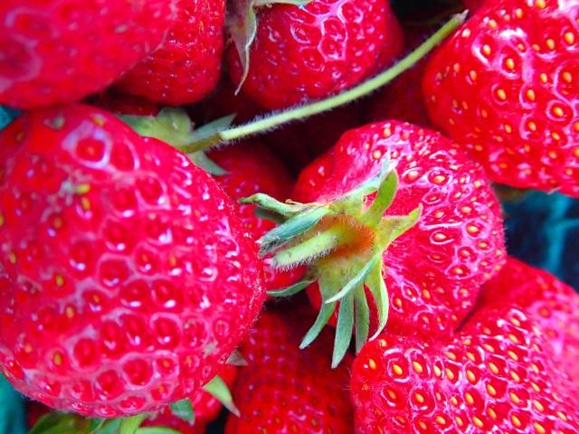 shuksan strawberries from Square Peg Farm!